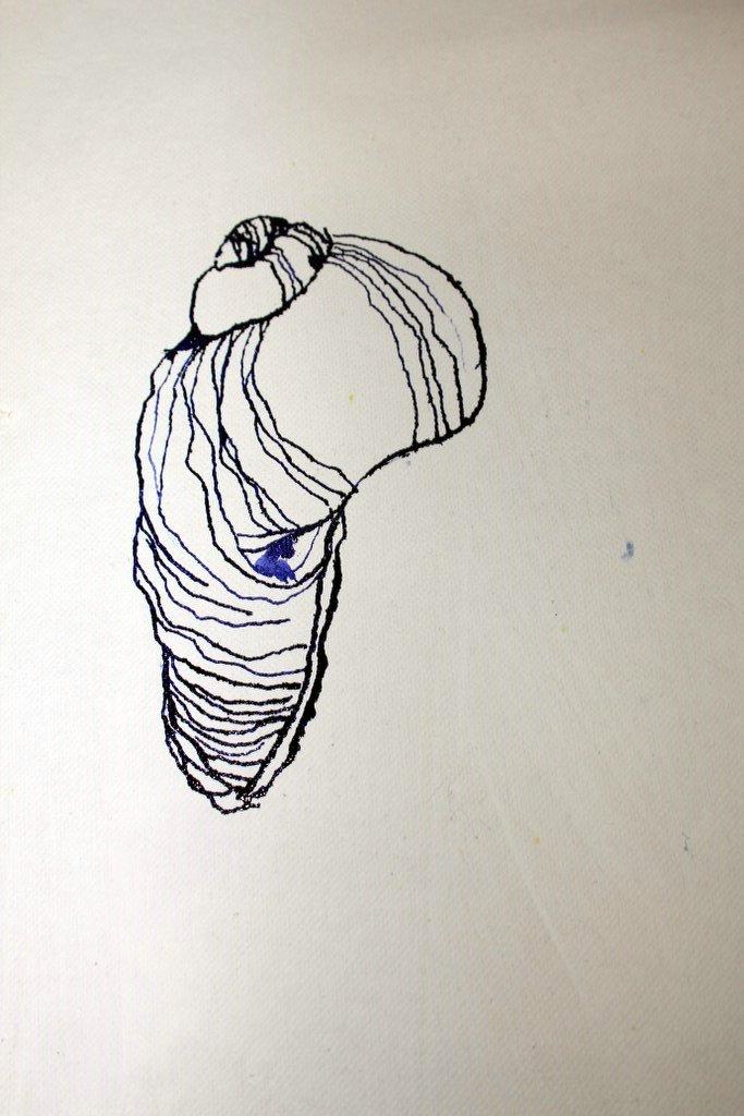 2 Muschel auf Leinwand (c) Zeichnung von Susanne Haun