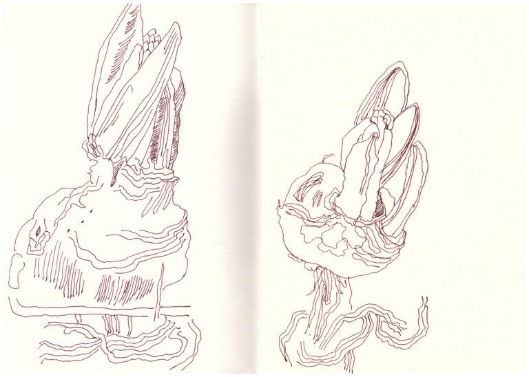 Susanne Haun Zeichnungen Blumen 6.1. - 15.2.2017 (c) Susanne Haun