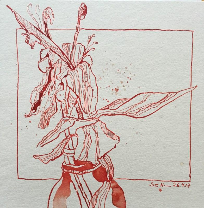 Verblühte Lilie - 25,4 x 25,4 cm - Krapprot Tusche auf Hahnemühle Aquarellblock (c) Zeichnung von Susanne Haun