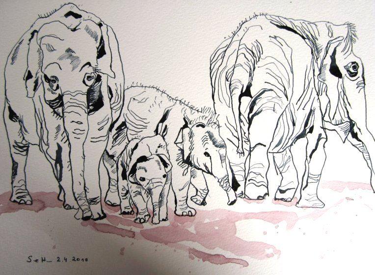 Elefantenfamilie (c) Zeichnung von Susanne Haun