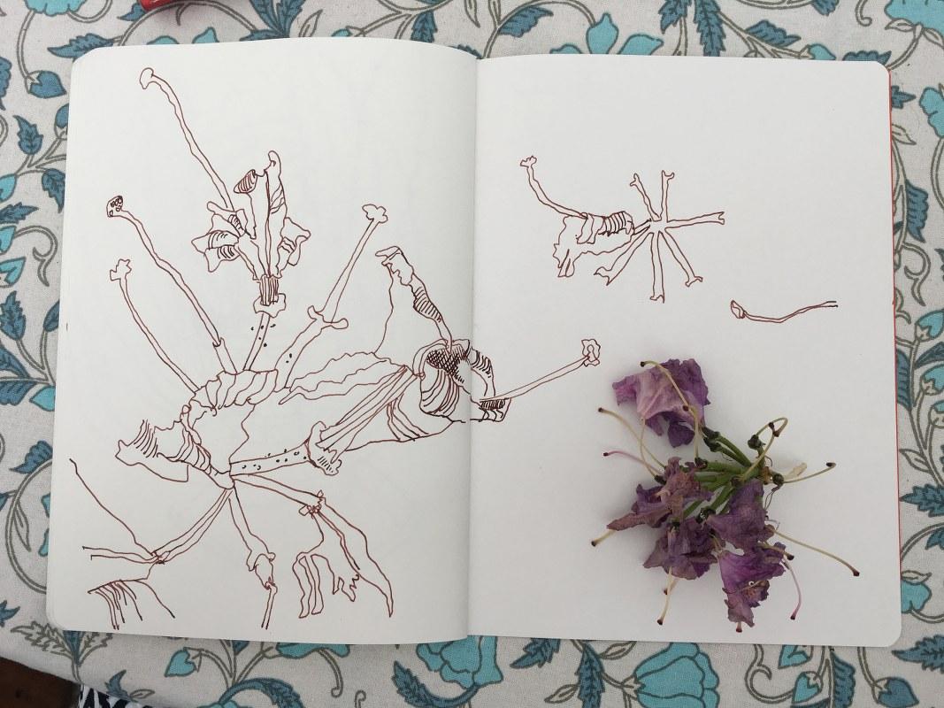 Rhododendron (c) Foto von Susanne Haun