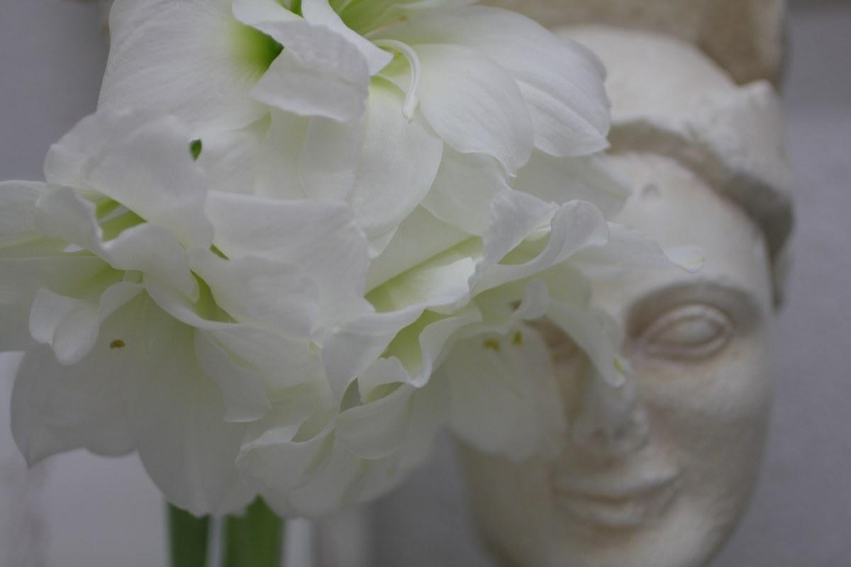 Hoplit mit Amaryllis (c) Foto von Susanne Haun