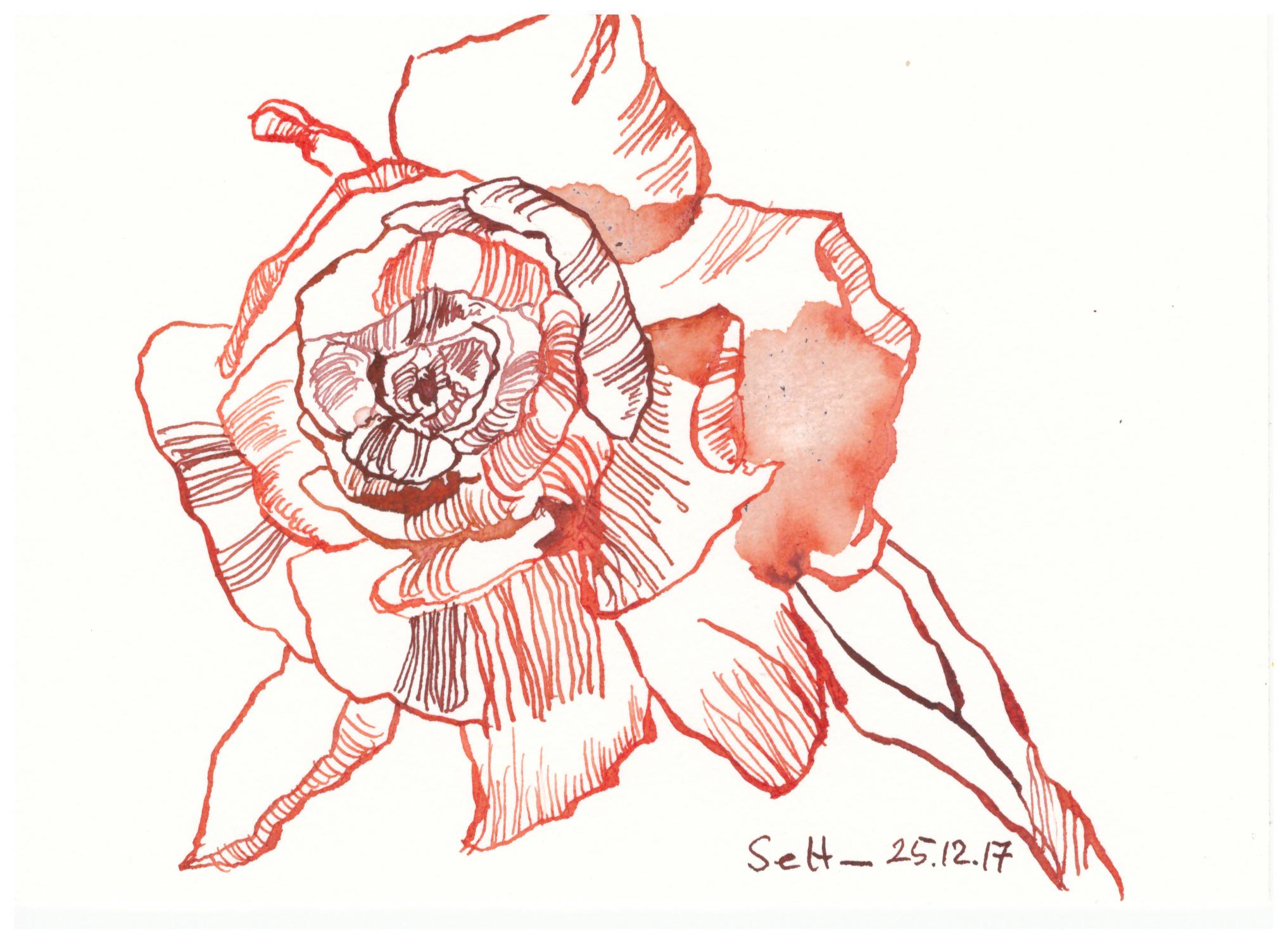 Rote Blume (c) Zeichnung von Susanne Haun