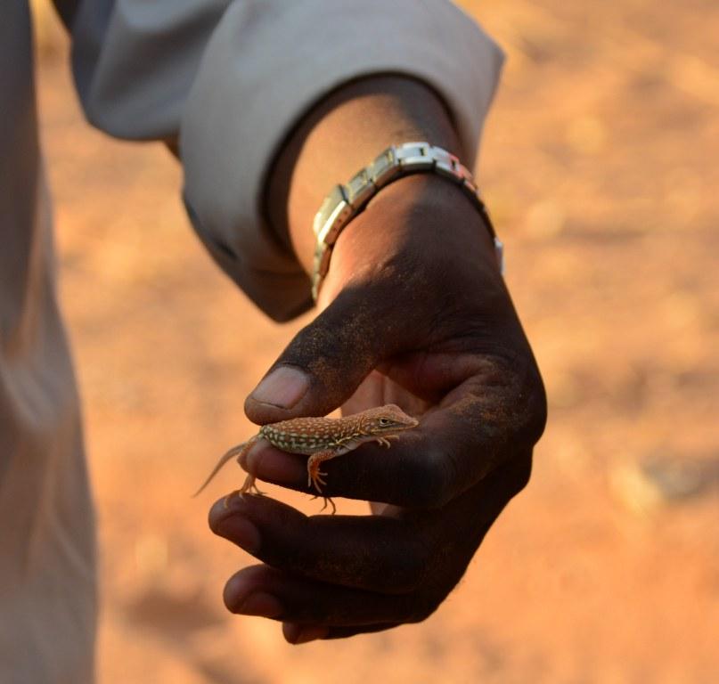 Franz zeigt uns die Tierwelt der Namib Wueste (c) Foto von M. Fanke