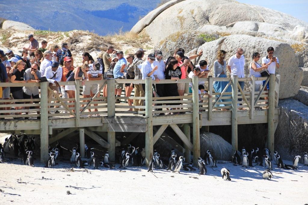 Vom Green Point zum Cape Point (c) Foto von Susanne Haun