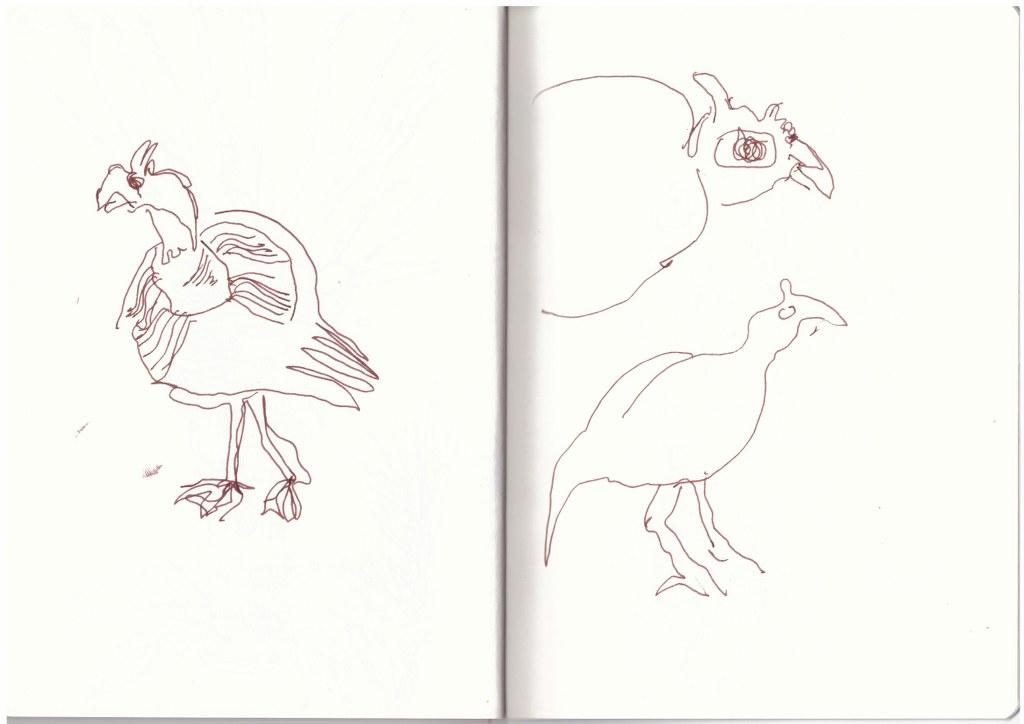 Perlhühner in Swakopmund (c) Zeichnung von Susanne Haun