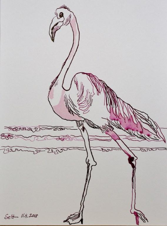 Flamingo 17 x 22 cm - Tusche auf Burgund Hahnemuehle (c) Zeichnung von Susanne Haun
