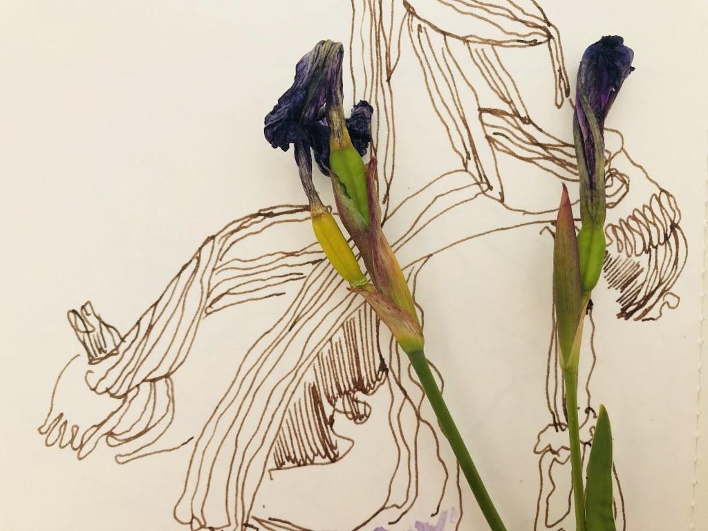 Beim Zeichnen der Iris (c) Foto und Zeichnung von Susanne Haun