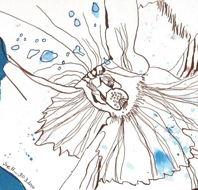 Entstehung des Blumenlebens (c) Zeichnung von Susanne Haun