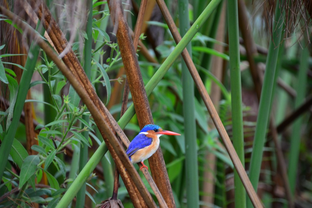 Vogel im Okavango Delta Botswana (c) Foto von M.Fanke