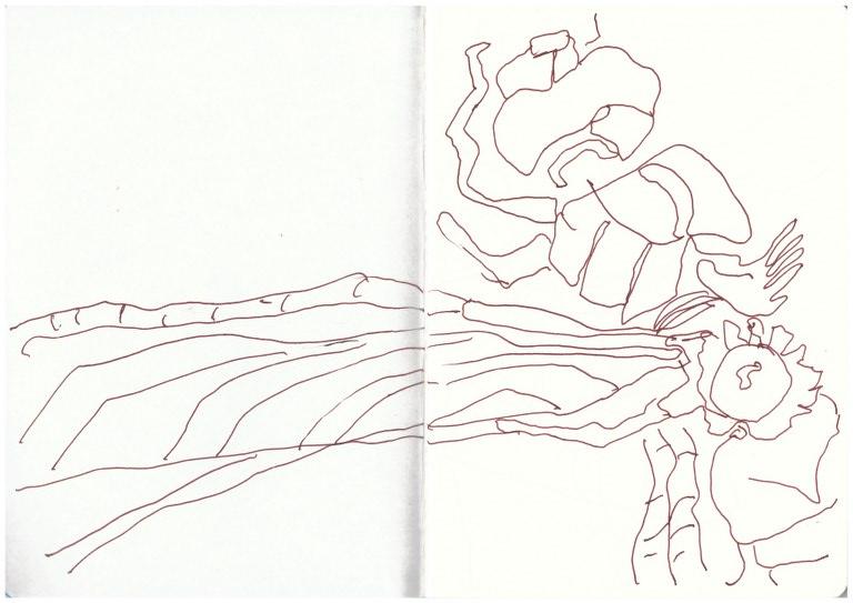 Libelle (c) Zeichnung von Susanne Haun