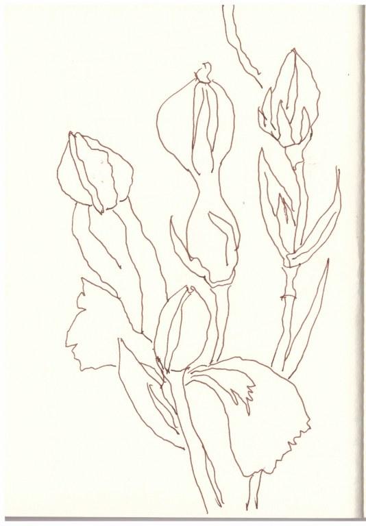 Auf dem Balkon - Nelken (c) Zeichnung von Susanne Haun