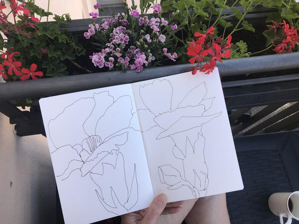 In der Morgensonne auf dem Balkon zeichnen - Geranien (c) Foto und Zeichnung von Susanne Haun