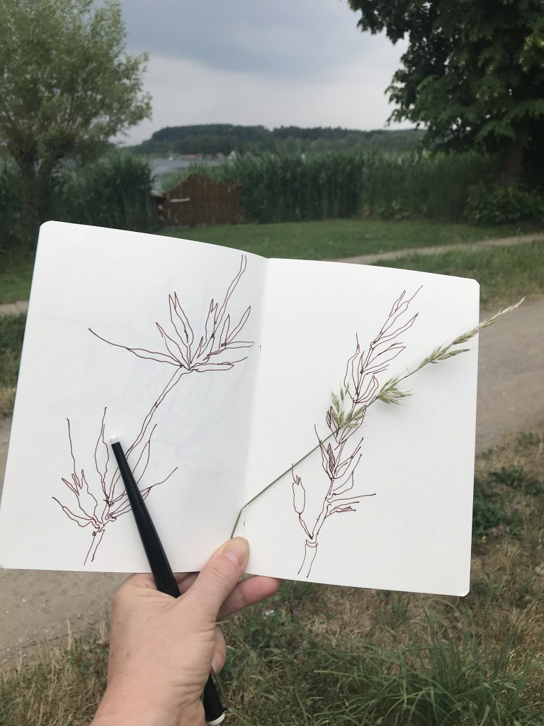 Getreide (c) Foto un Zeichnung von Susanne Haun