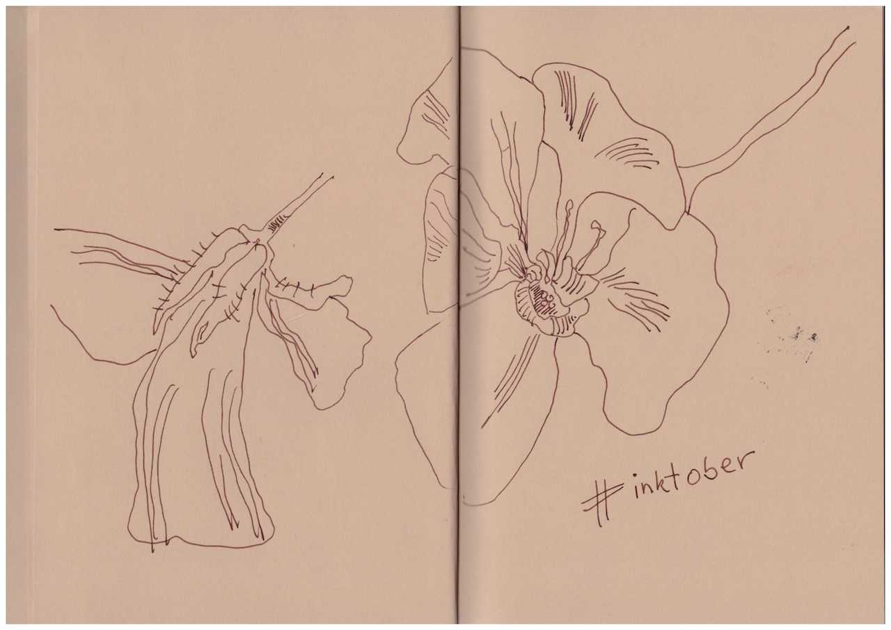 Florales aus dem Skizzenbuch - Zeichnung von Susanne Haun (c) VG Bild-Kunst , Bonn 2018