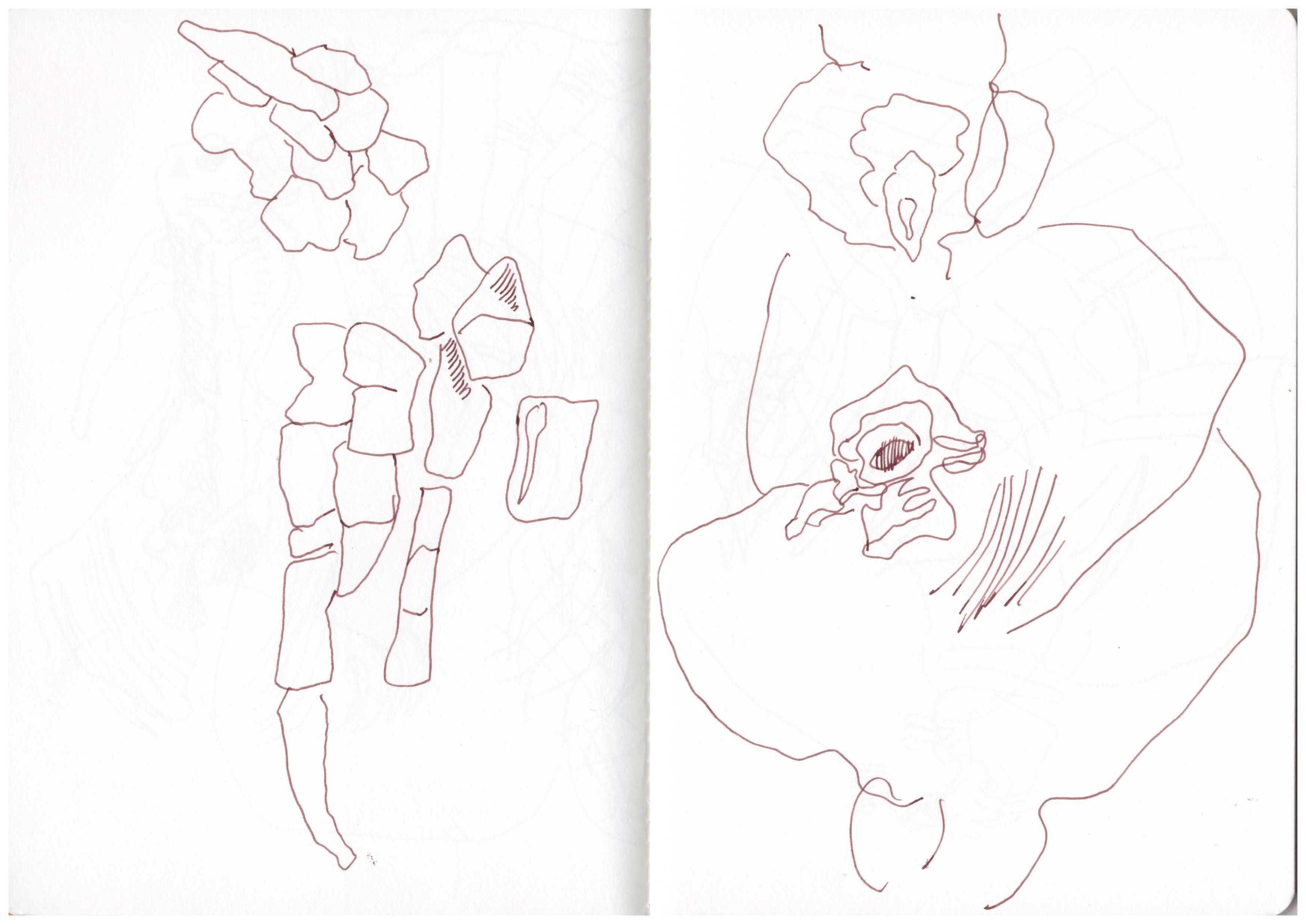 Pute und Truthahn - Zeichnung von Susanne Haun (c) VG Bild-Kunst , Bonn 2018