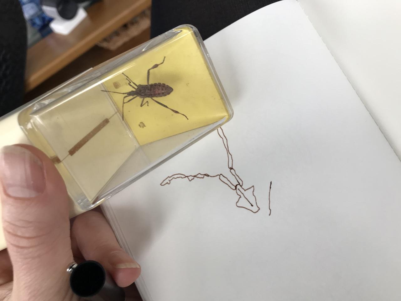 Kakerlake - Foto und Zeichnung von Susanne Haun (c) VG Bild Kunst, Bonn 2018