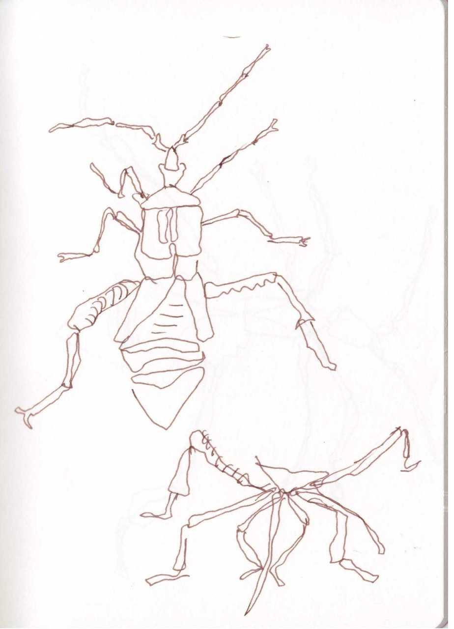 Kakerlake - Zeichnung von Susanne Haun (c) VG Bild Kunst, Bonn 2018