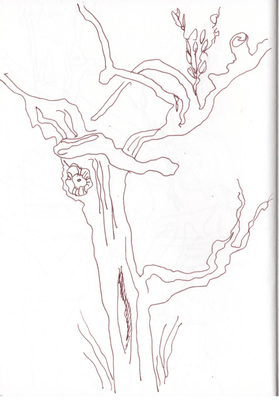 Skizzenbuch, Gerdas Olivenbäume, Zeichnung von Susanne Haun (c) VG Bild-Kunst, Bonn 2019