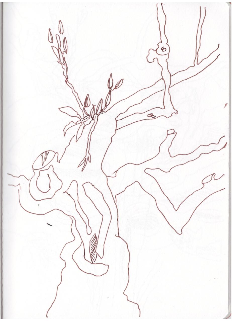 Skizzenbuch, Gerdas Olivenbäume, Zeichnung von Susanne Haun (c) VG Bild-Kunst, Bonn 2019 Kopie
