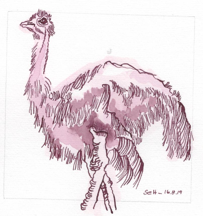 Afrika, Der Vogel Strauss, 15 x 15 cm, Tusche auf Hahmemuehle Aquarellkarton, Zeichnung von Susanne Haun (c) VG Bild-Kunst, Bonn 2019