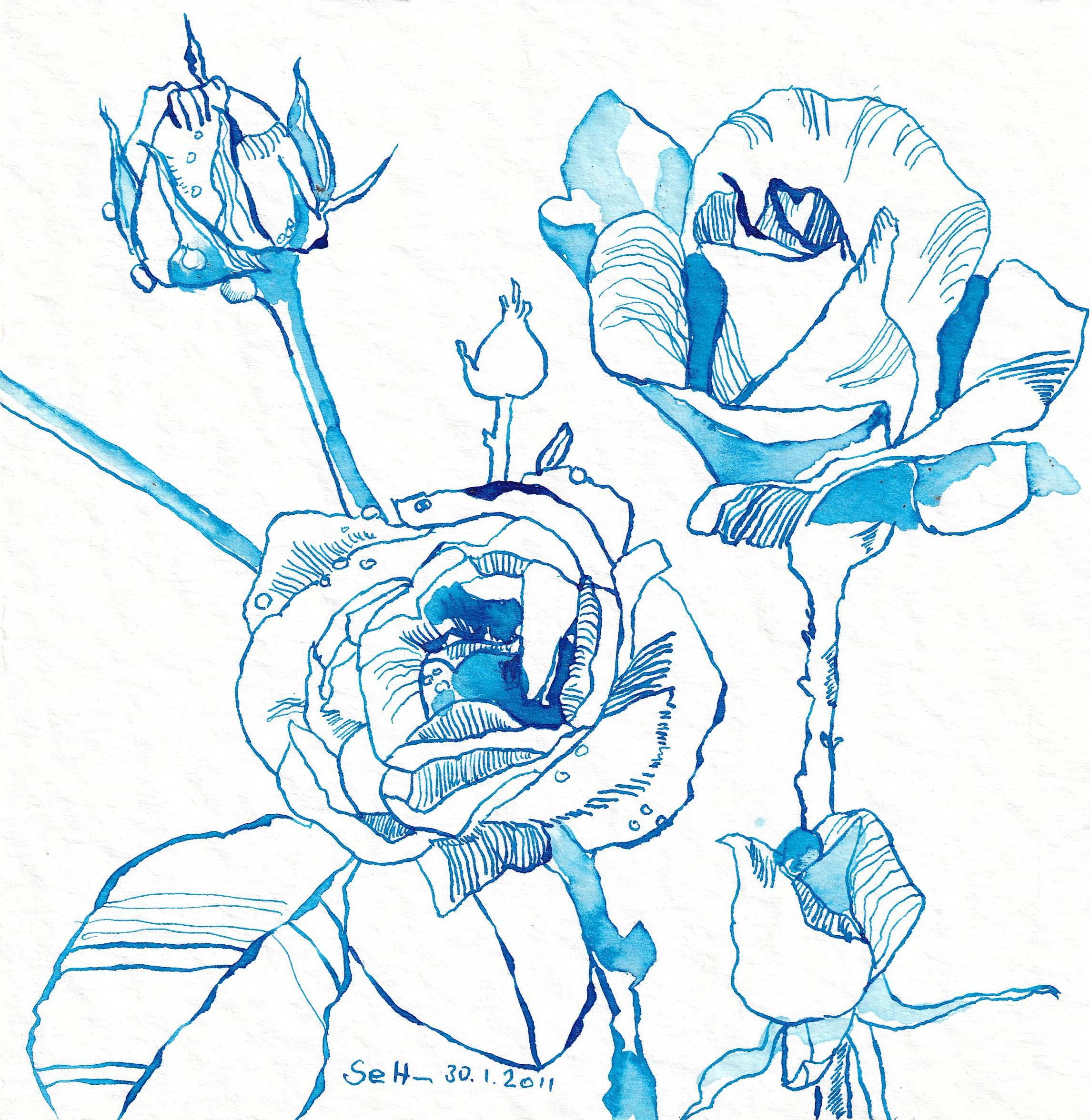 4 - Susanne Haun, Das Blau der Romantiker in einer Rose, 30.1.2011, 20 x 20 cm, Tusche auf Hahnemühle Aquarellkarton