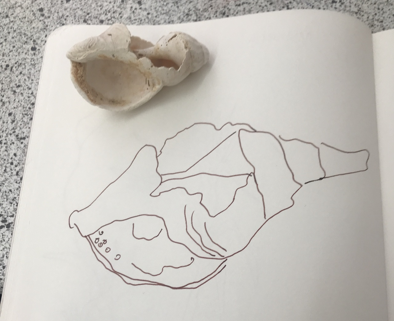 Eine Muschel entsteht, Foto von Susanne Haun (c) VG Bild-Kunst, Bonn 2020