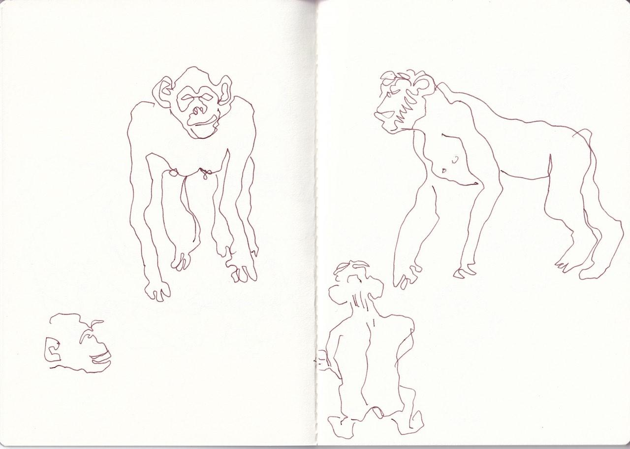 Aus dem Skizzenbuch von Susanne Haun, Zootiere, 2020 (c) VG Bild-Kunst, Bonn 2020
