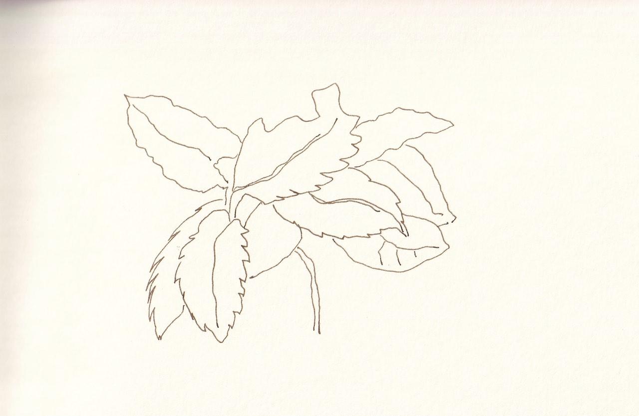 Rhododendron, Zeichnung von Susanne Haun (c) VG Bild-Kunst, Bonn 2020