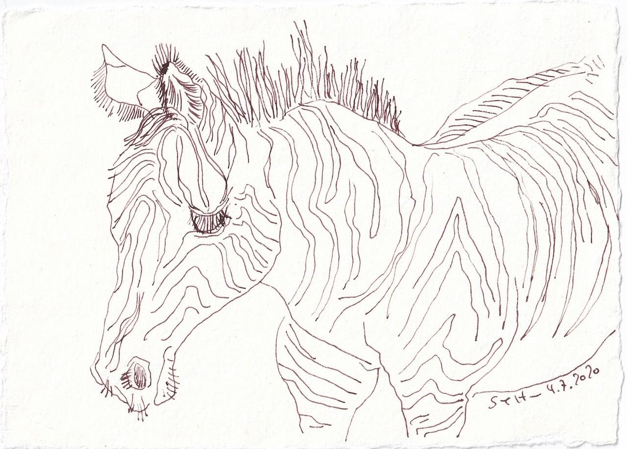 Tagebucheintrag 2.7.2020, Alles in Streifen - das Zebra, 20 x 15 cm, Tinte und Buntstift auf Silberburg Büttenpapier, Zeichnung von Susanne Haun (c) VG Bild-Kunst, Bonn 2020