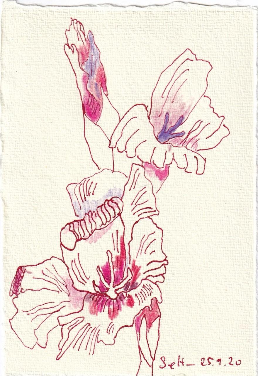 Tagebucheintrag 25.09.2020, Gladiolen scheinen stolz, 20 x 15 cm, Tinte und Buntstift auf Silberburg Büttenpapier, Zeichnung von Susanne Haun (c) VG Bild-Kunst, Bonn 2020