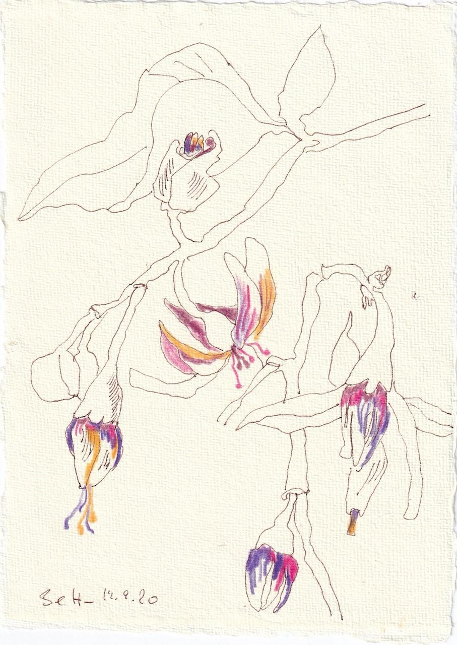 Tagebucheintrag 19.09.2020, Zarte Blüte in Pink, 20 x 15 cm, Tinte und Buntstift auf Silberburg Büttenpapier, Zeichnung von Susanne Haun (c) VG Bild-Kunst, Bonn 2020