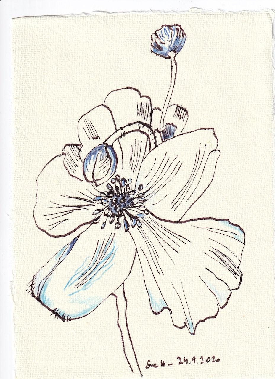 Tagebucheintrag 24.09.2020, Blaue Blüte, 20 x 15 cm, Tinte und Buntstift auf Silberburg Büttenpapier, Zeichnung von Susanne Haun (c) VG Bild-Kunst, Bonn 2020