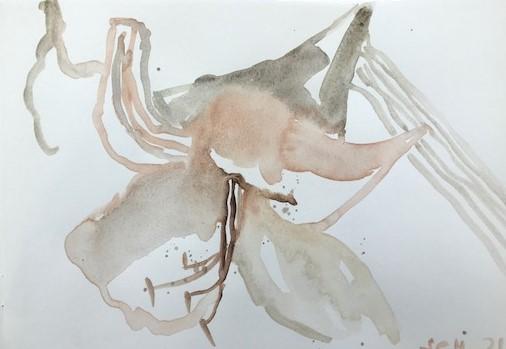 Amaryllis mit Terra Saravia, Skizzenbuch Susanne Haun (c) VG Bild-Kunst, Bonn 2021